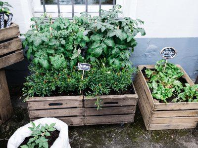 Anbauplan und Gartenkalender für Balkon und Terrasse