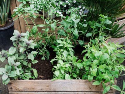Gesunde Pflanzen erkennen