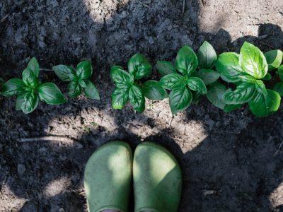 Kräuter und Gemüse für die zweite Saisonhälfte säen und pflanzen
