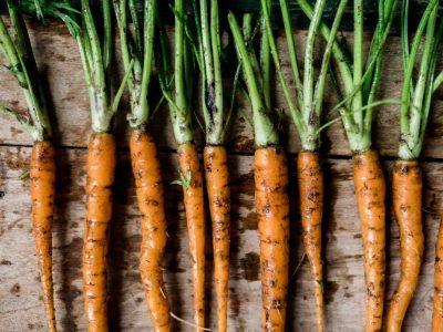 Pflanzen und Säen für die zweite Saisonhälfte