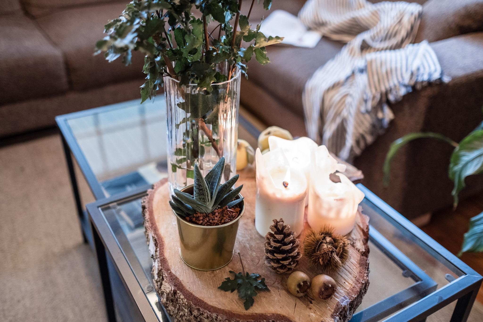 best of pflegeleichte zimmerpflanzen f r jeden typ. Black Bedroom Furniture Sets. Home Design Ideas