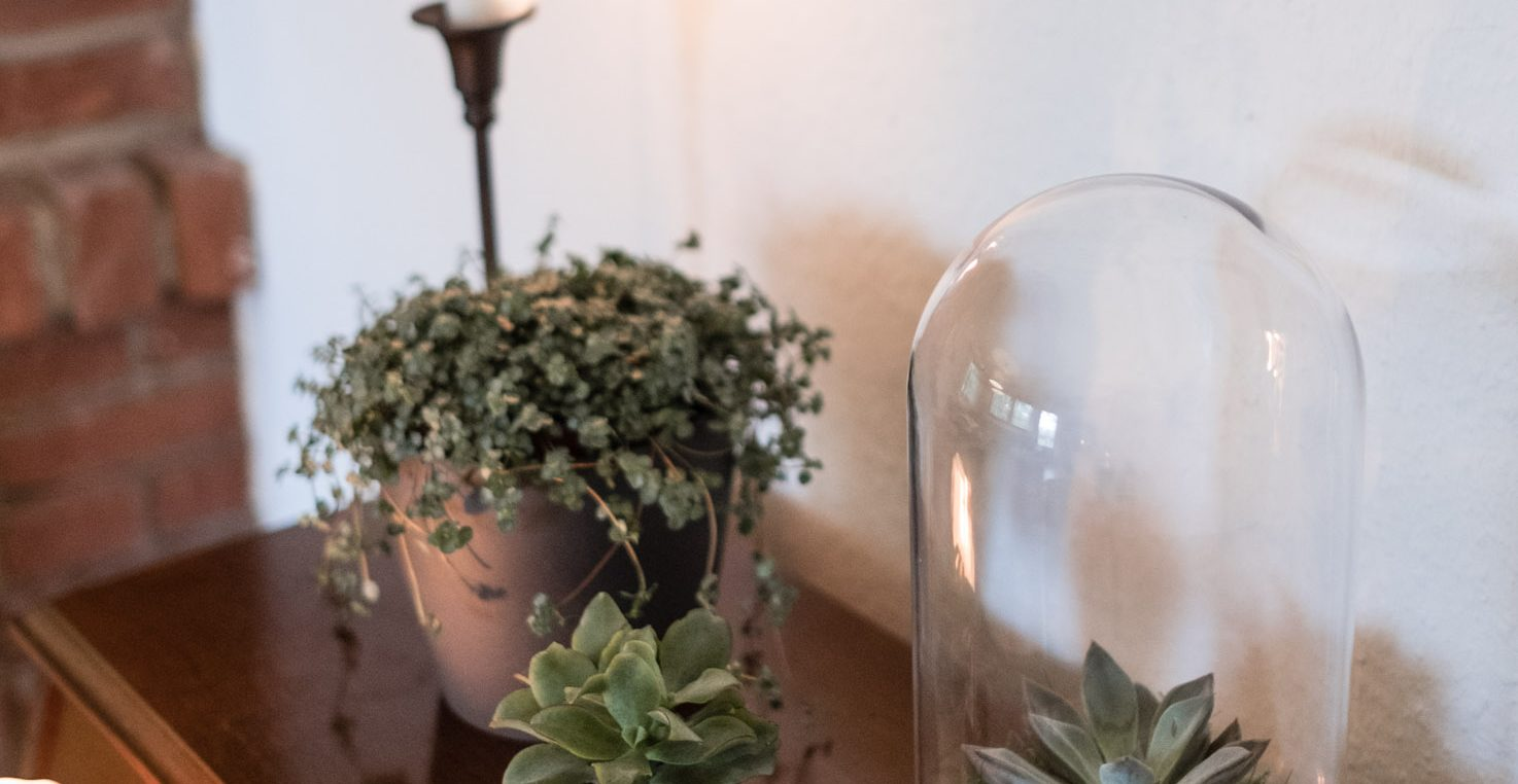 Best Of Pflegeleichte Zimmerpflanzen Fur Jeden Typ Osmers Garten