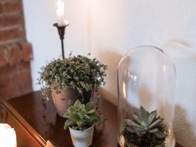 Best of pflegeleichte Zimmerpflanzen für jeden Typ