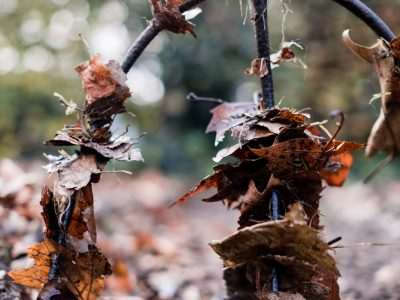 Gartenaufgaben im Herbst für den Winter