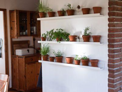Kräuter und Gemüse im Haus ernten- DIY für die Winterzeit