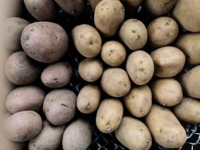 Kartoffeln - anbauen, pflegen, ernten