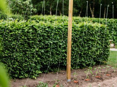 TOMATEN – VERMEHREN, PFLEGEN, ERNTEN TEIL 5: Auspflanzen und Rankhilfe DIY