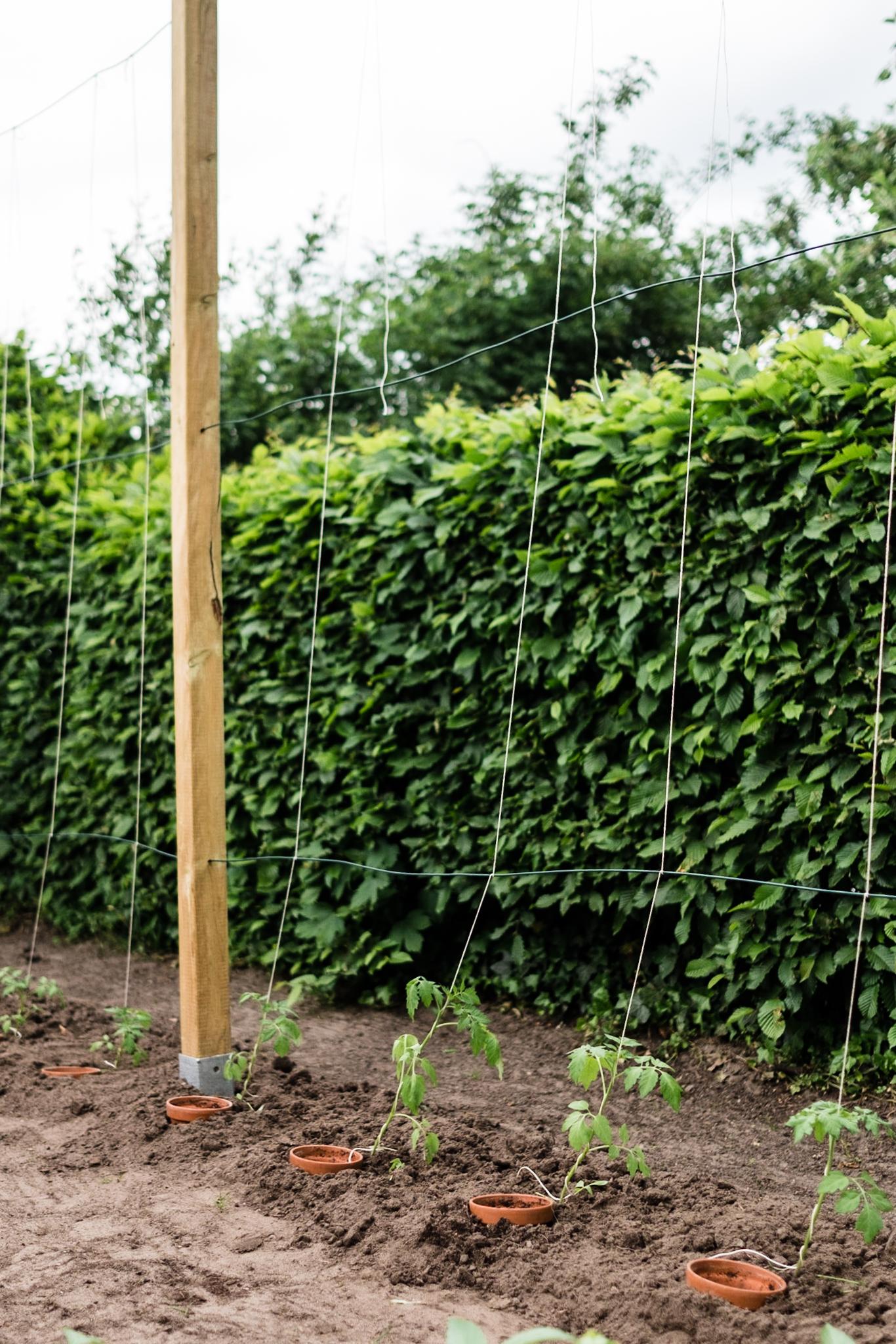 Tomaten Rankhilfe Selber Bauen : tomaten vermehren pflegen ernten teil 5 auspflanzen und rankhilfe diy osmers garten ~ A.2002-acura-tl-radio.info Haus und Dekorationen