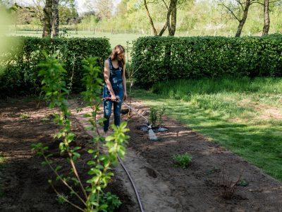 Pflanzung im Testgarten
