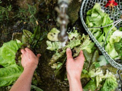 Salatbar - 6 leckere Salatsorten für das ganze Jahr