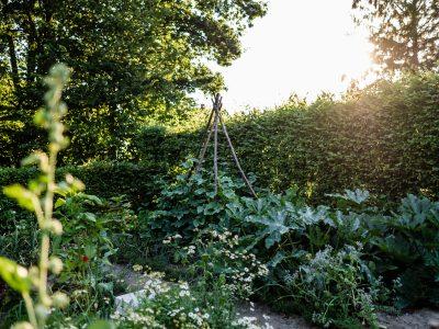 Anbauplan und Gartenkalender für das Gemüsebeet auf 16qm