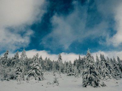 Geschenkideen 2018 und Winter Playlist von Osmers Garten