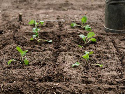 Basics zum Pflanzen