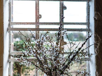 Quellen für samenfestes Saatgut und Jungpflanzen