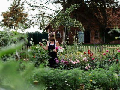 Blumen im Garten schneiden und einen Strauß binden
