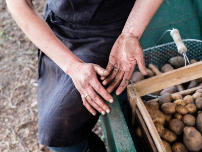 Selbstversorgung mit Kartoffeln und Sortentipp
