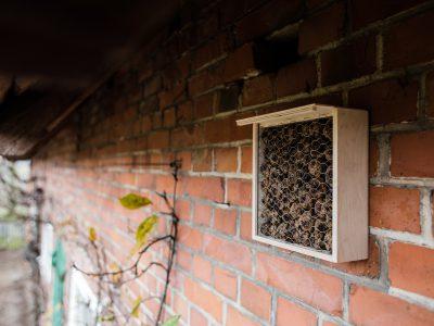 Insektenhotel bauen und füllen + Verlosung